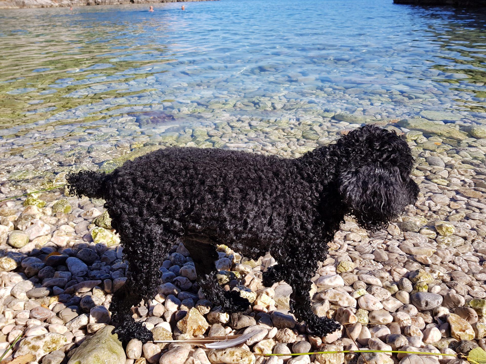 Spiaggia per cani Rab
