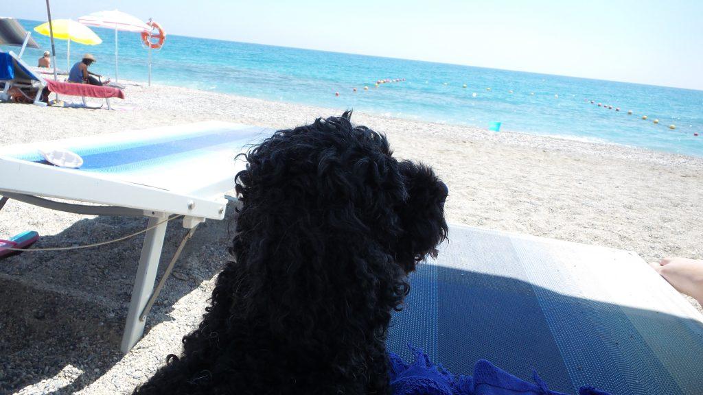 Portare il cane in spiaggia: evitare le ore più calde