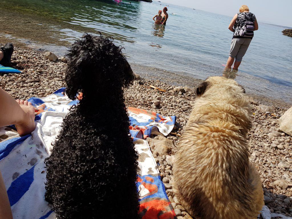 amicizia tra cani in spiaggia
