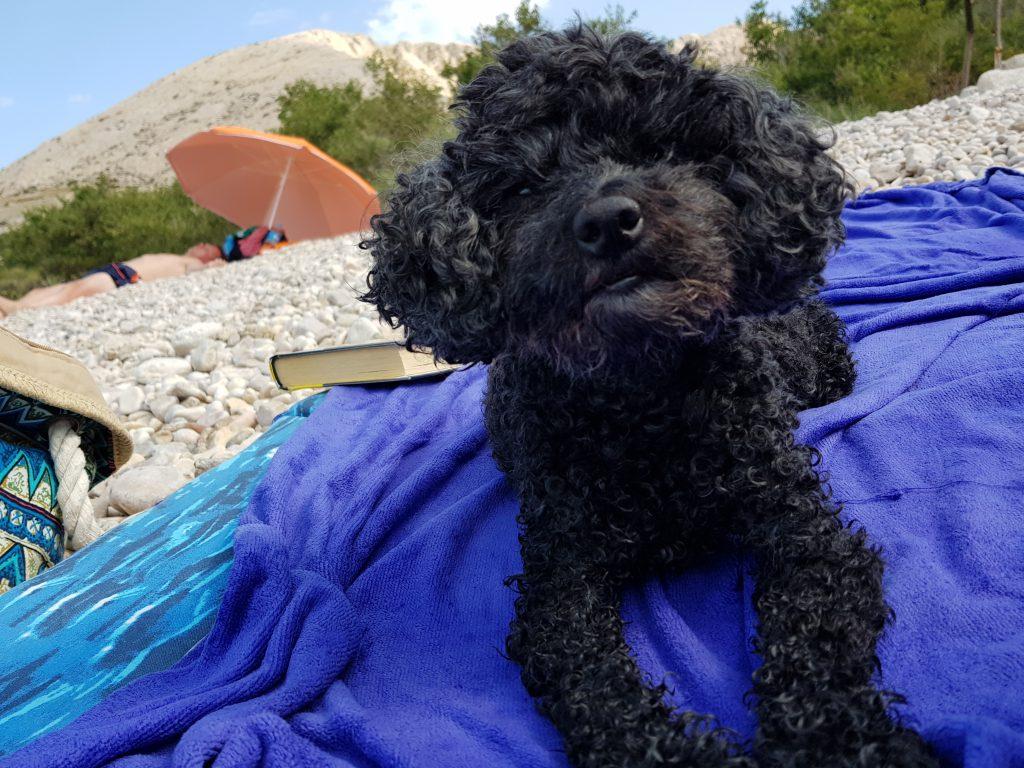 Cosa portare in spiaggia con il cane