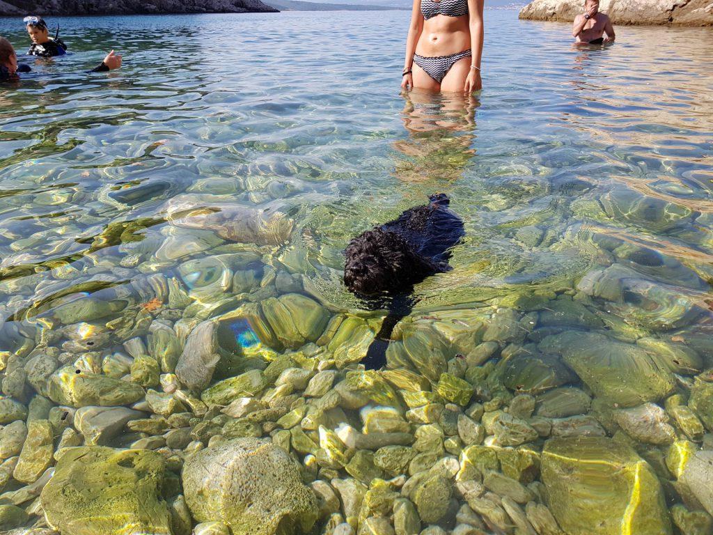 In spiaggia con il cane: Lizzie in mare