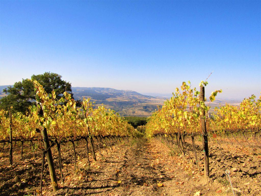 Dove vedere il foliage in Toscana: la Val d'Orcia