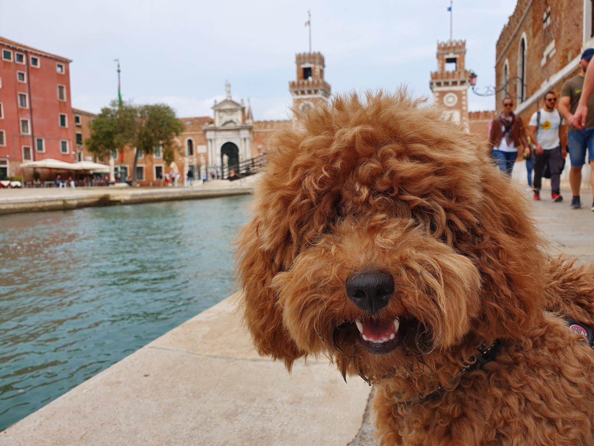 Visitare Venezia con il cane